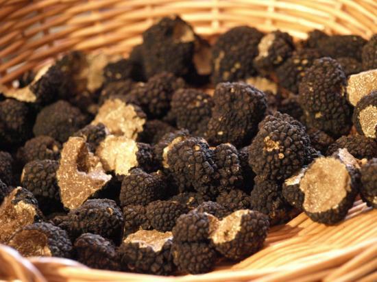 truffes de bougogne, cavage, chien truffier, truffière, trufficulture